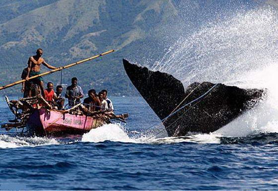 Bertarung dengan paus